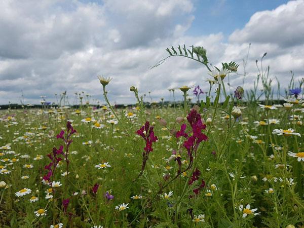 cottage garden meadowmat